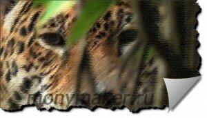 Большая пятнистая кошка