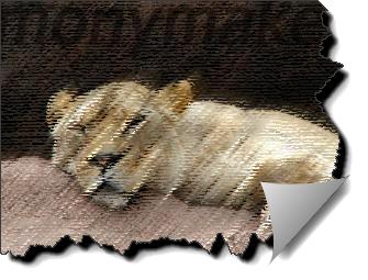 Король лев на картинке о животных